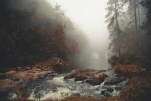 body of water in between trees covered by fog